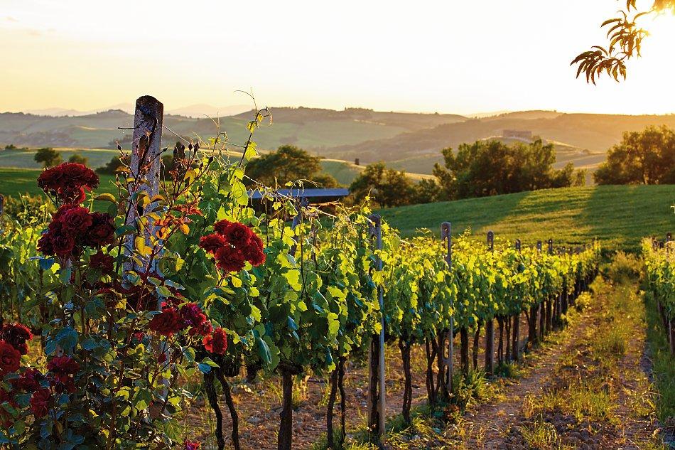 Bur Reisen Gmbh Piemont Alba Asti Truffel Wein 6 Tage